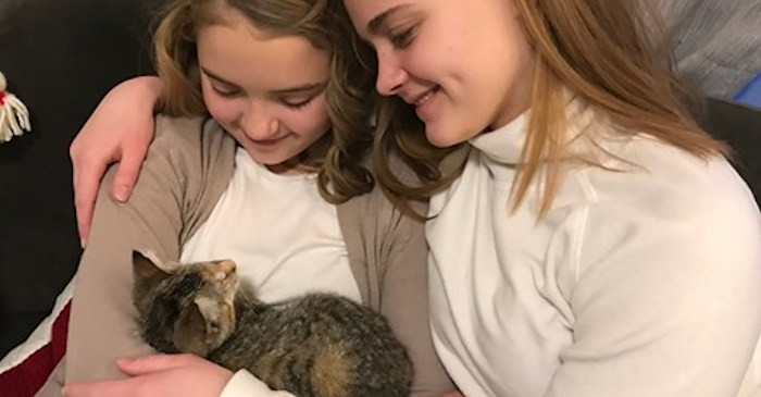 Blind adopted kitten Brittany Falkers KGW