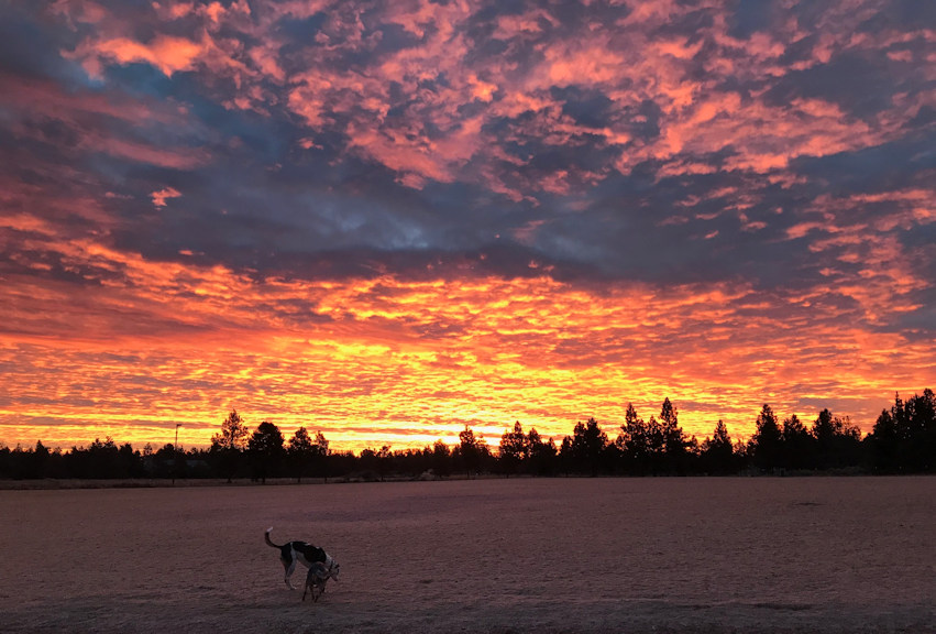 Sunrise Pine Nursery dog park Rick Miller 1228