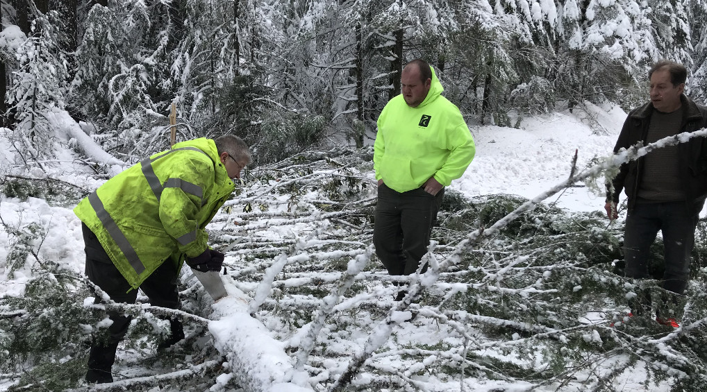Motorists made quick work of removing a tree that fell across Hwy. 22 on Tuesday afternoon