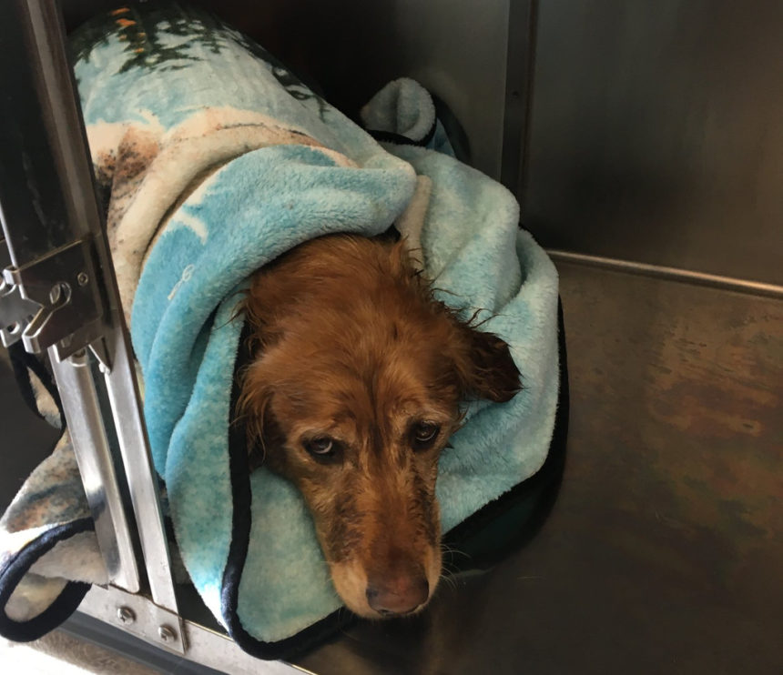 Lucy dog rescue DCSO 124-3