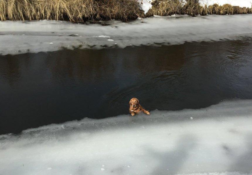 Lucy dog rescued DSCO 124-1
