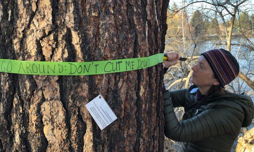 Nancy Beaver ribbon Drake Park tree 2-23