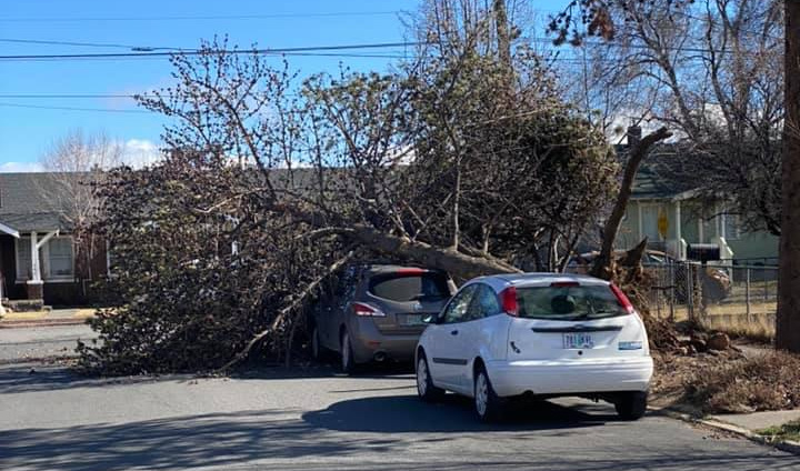 Tree onto car Delaware and Hill, Rodney Tiahrt 2-23