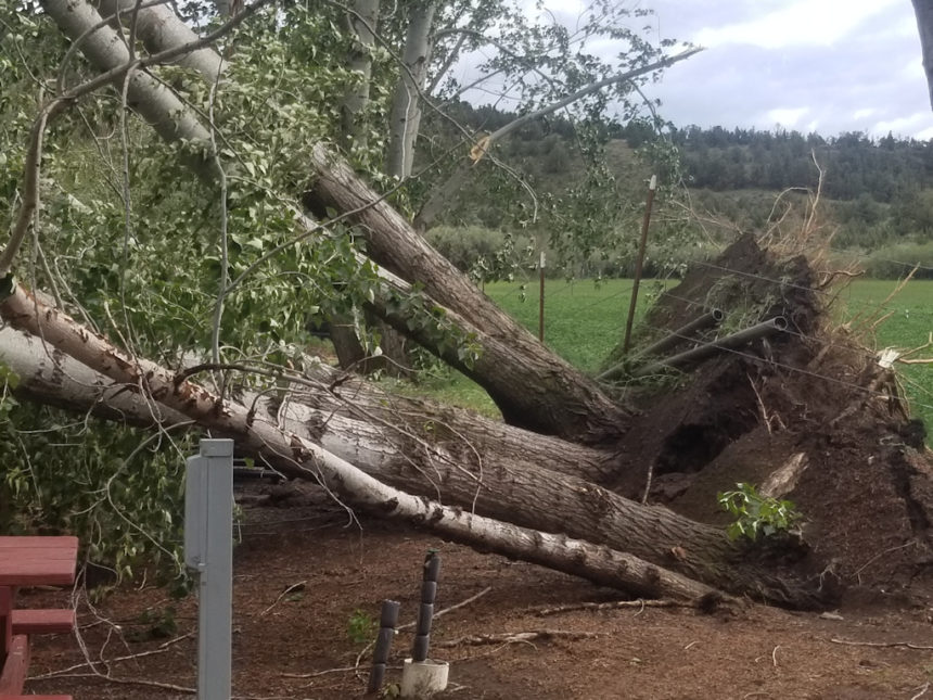 Downed trees KOA Culver Chad Phillippi 530-1
