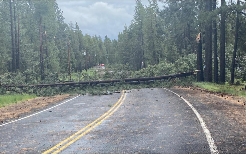 Tree across road Spring River area DCSO 530