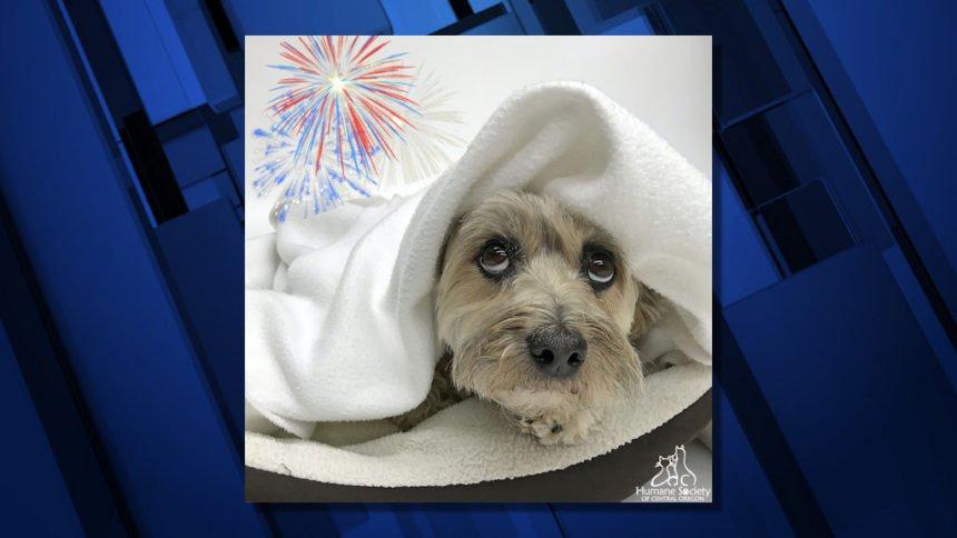 Dog scared fireworks HSCO