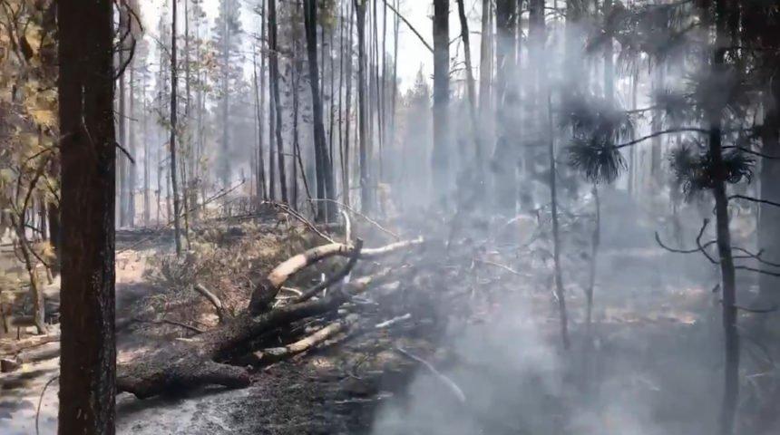 Rosland Road Fire COFMS 719