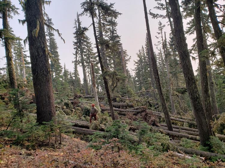 Downed trees near Timberline to Town Trail