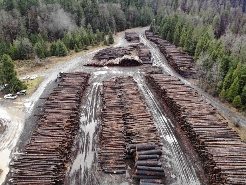 Hwy 126 log deck