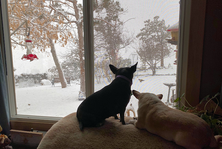 Terrebonne dogs watch snow Belen Rickman 122