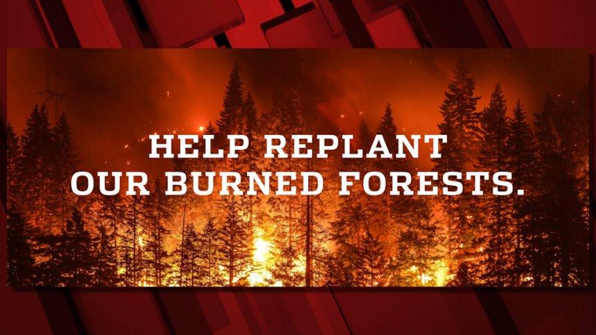 Wildfire Tree Replanting Fund
