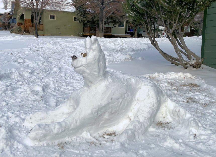 Snow dog Annie Gaca 212