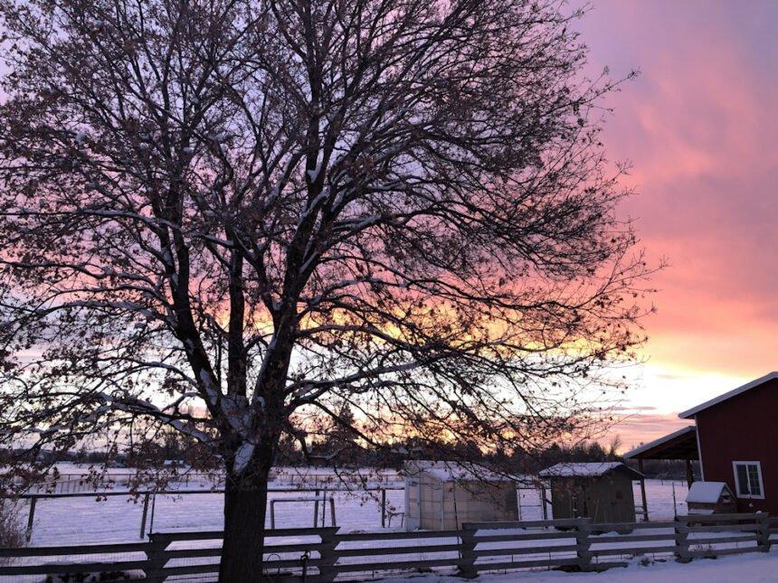 Snowy sunrise Terrebonne Julie Kline 124