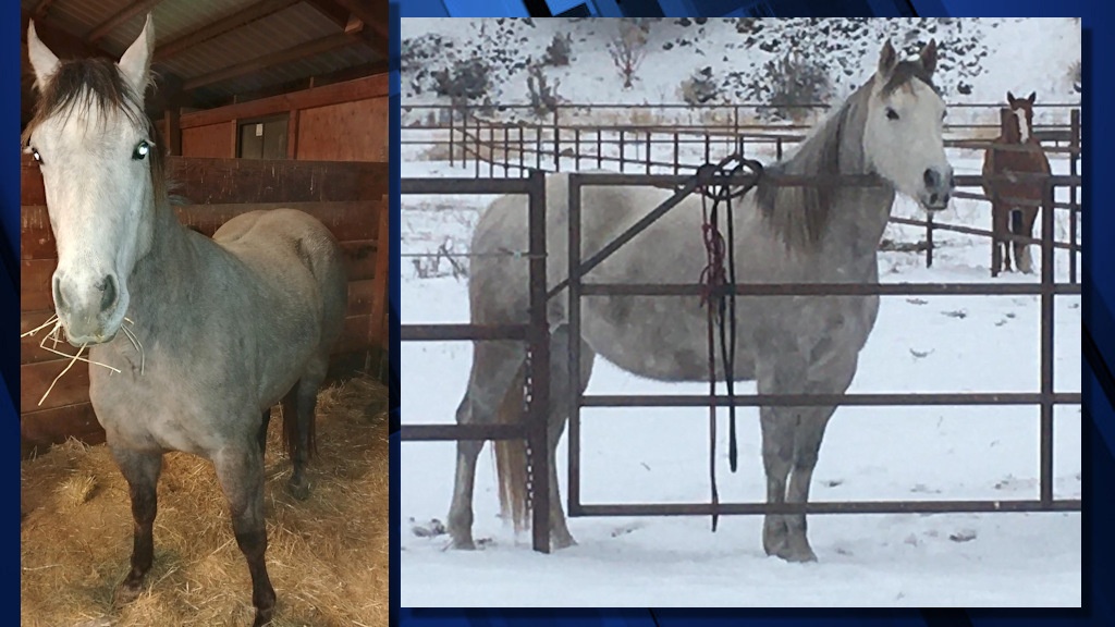An 8-year-old mare was reported stolen from a boarding facility east of Bend over the weekend