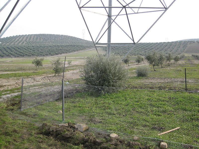 Netting protects the new native plants from herbivores beneath a power transmission line