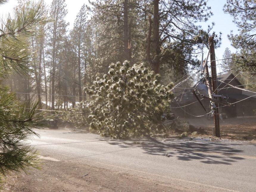 Cinder Butte Road DRW downed tree line Robert Flood 328