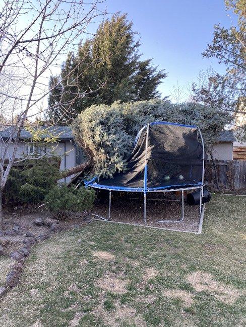 SW Bend wind downed tree Heidi Krueger 328