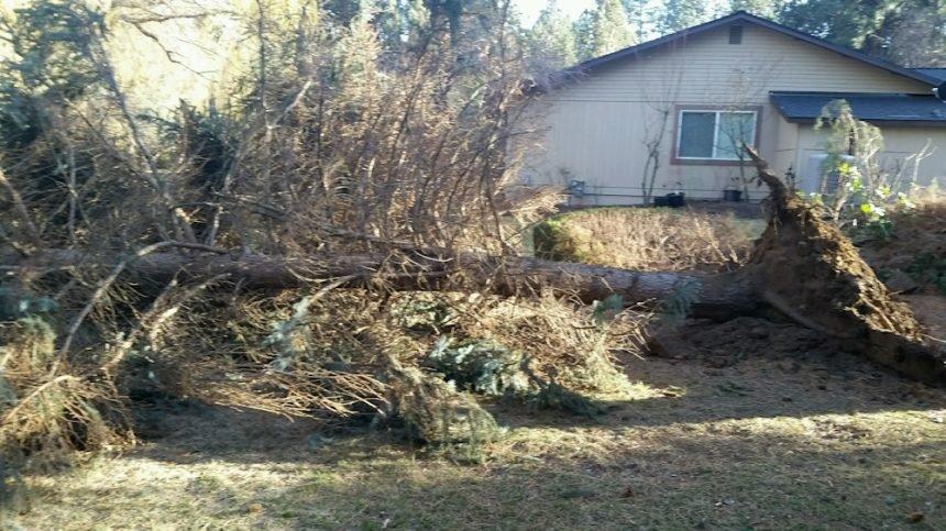 Tree down Timber Ridge Susie Hughes 328