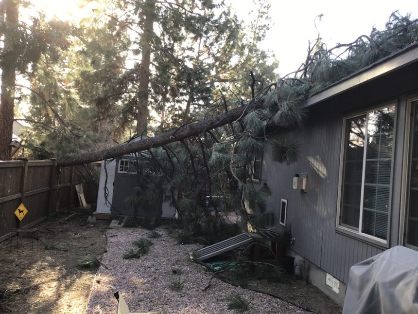 Tree on roof SW Bend Molly Hufford 328