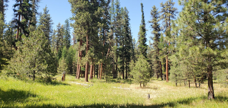 Black Mountain Project area on the Ochoco National Forest