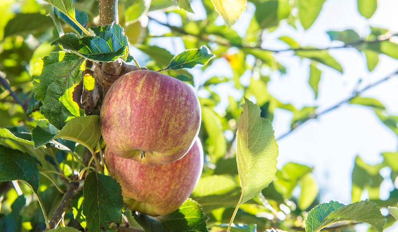 Prevention is the best medicine for fighting diseases on apples and other fruit trees