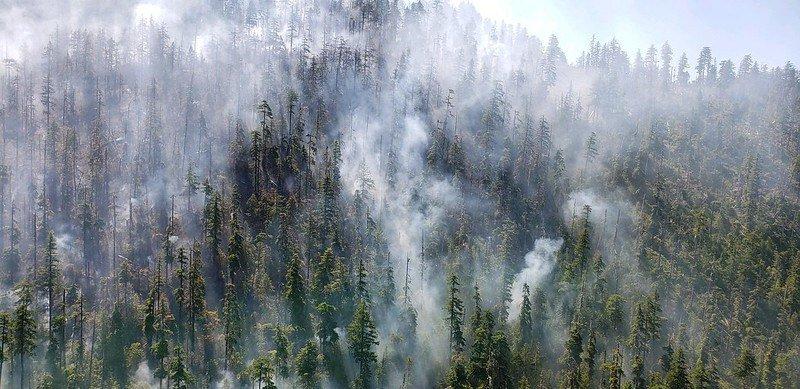 Beachie Creek fire in 2020, when it was still small.