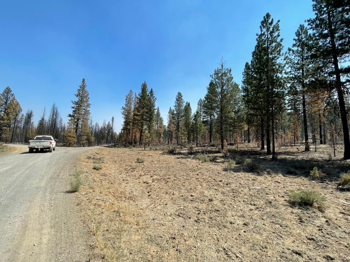 A portion of the Black Hills Ecosystem Restoration Project Area, an area where fuels reduction treatments were previously implemented, shows the effects of low-intensity fire an limited damage in the wake of the Bootleg Fire
