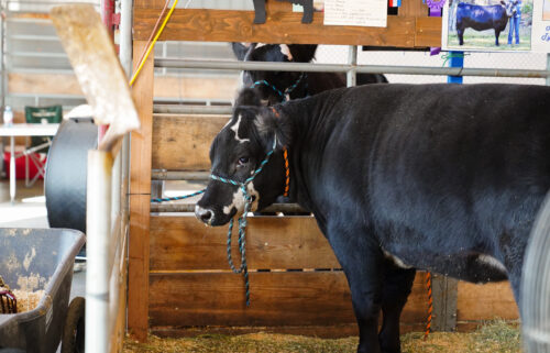 Deschutes County Fair and Rodeo