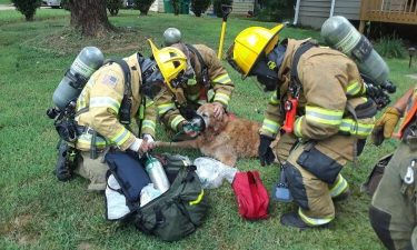 Gwinnett County firefighters rescued a family's golden retriever after their home caught fire Thursday.