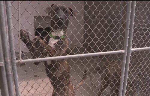 Animal shelters are being overwhelmed by the number of animals they're taking in.