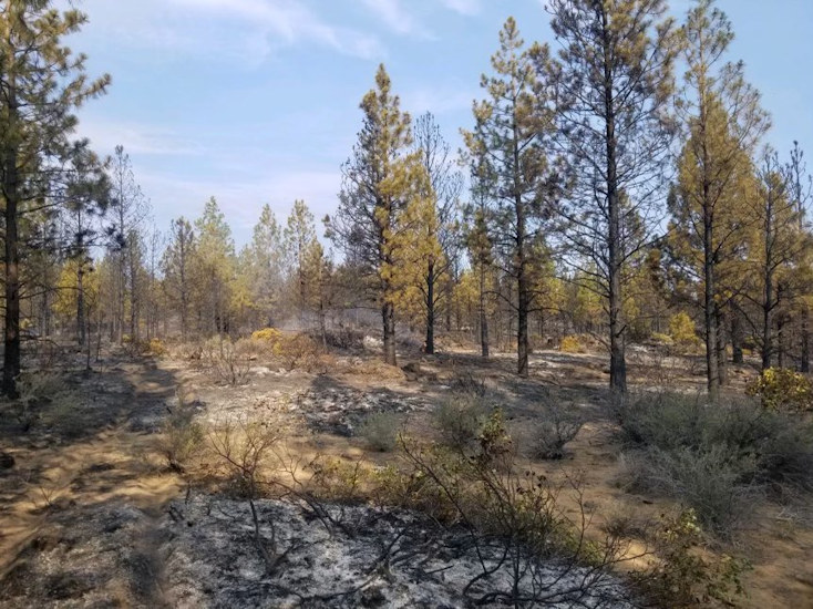 Burned area of the Swamp Wells Trail Fire SE of Bend
