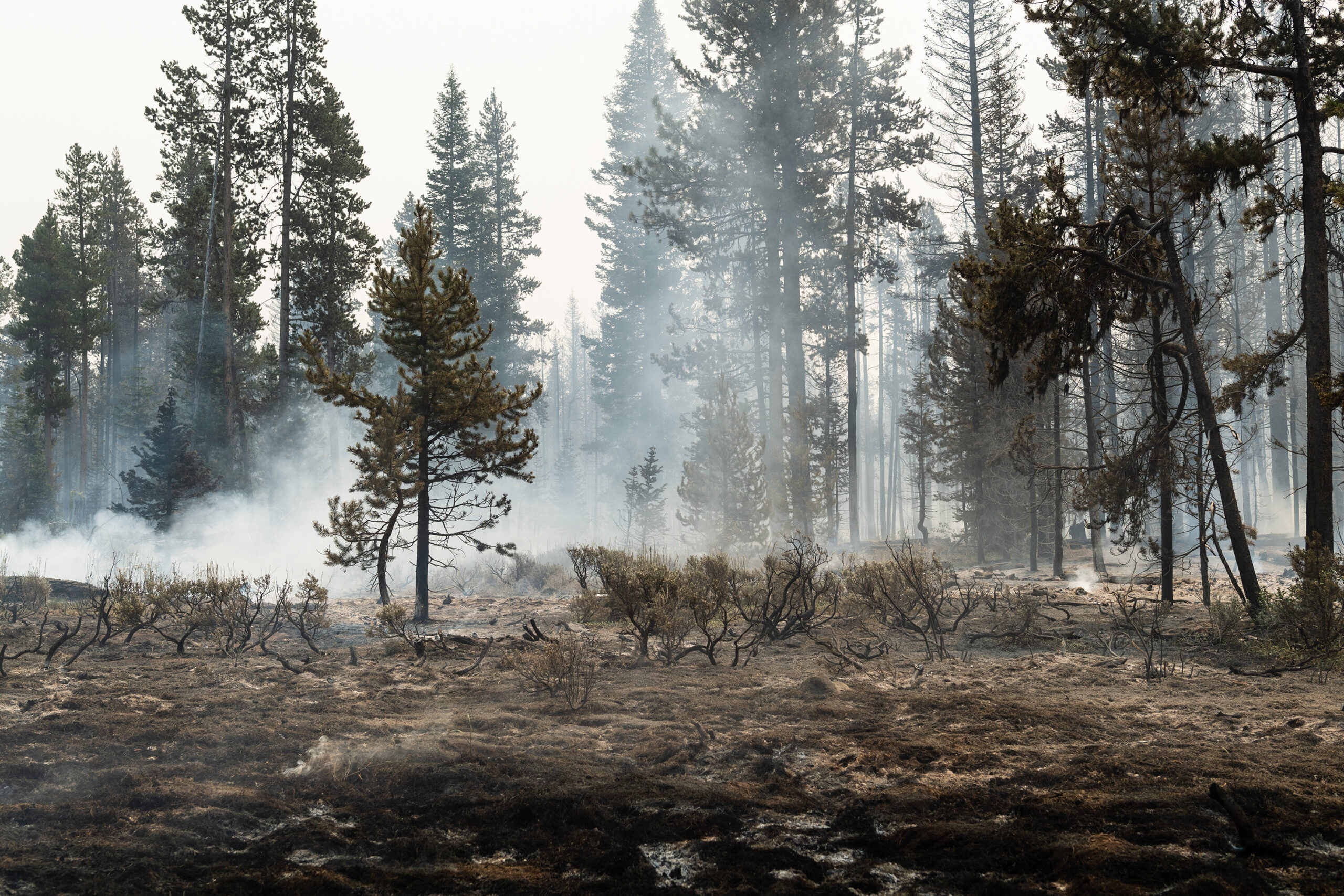 <i>Mathieu Lewis-Rolland/Getty Images</i><br/>Forest undergrowth smolders on the north front of the Bootleg Fire on July 23 near Silver Creek