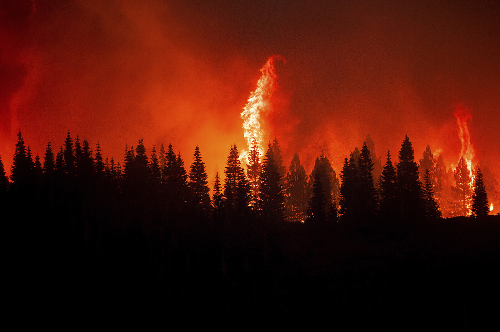 <i>Noah Berger/AP</i><br/>Flames from the Dixie Fire crest a hill in Lassen National Forest.