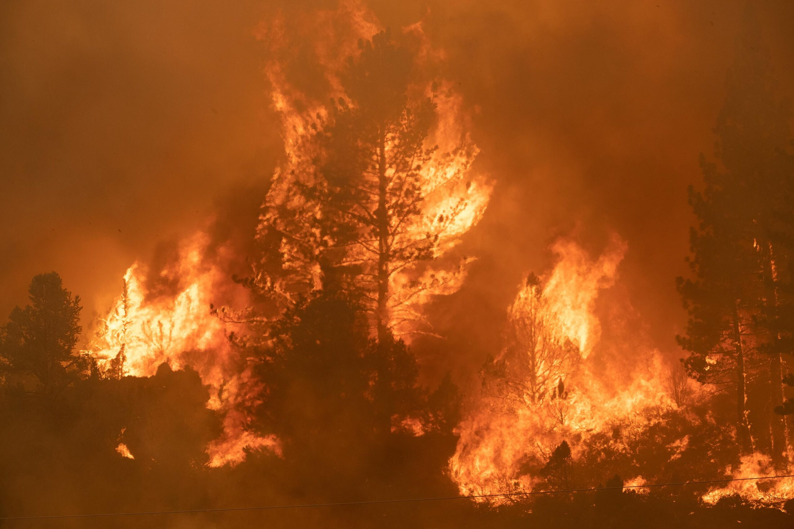 <i>David Odisho/Bloomberg/Getty Images</i><br/>Trees burn along Highway 89 during the Tamarack Fire in the Californian city of Markleeville on July 17.