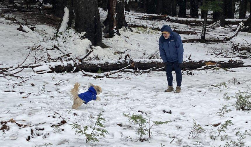 Mt Bachelor snow dog Maureen Radon 919