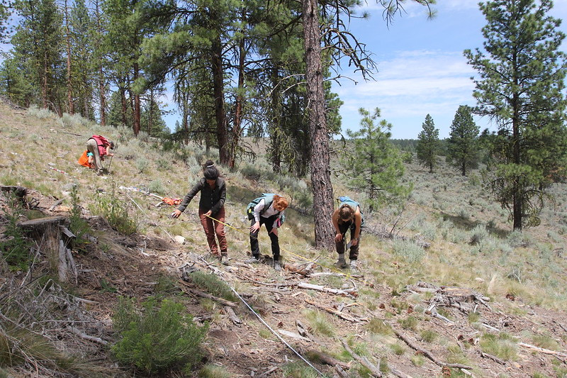 OSU field crews monitor surface fuels in thinned stands on the Malheur National Forest in Eastern Oregon.