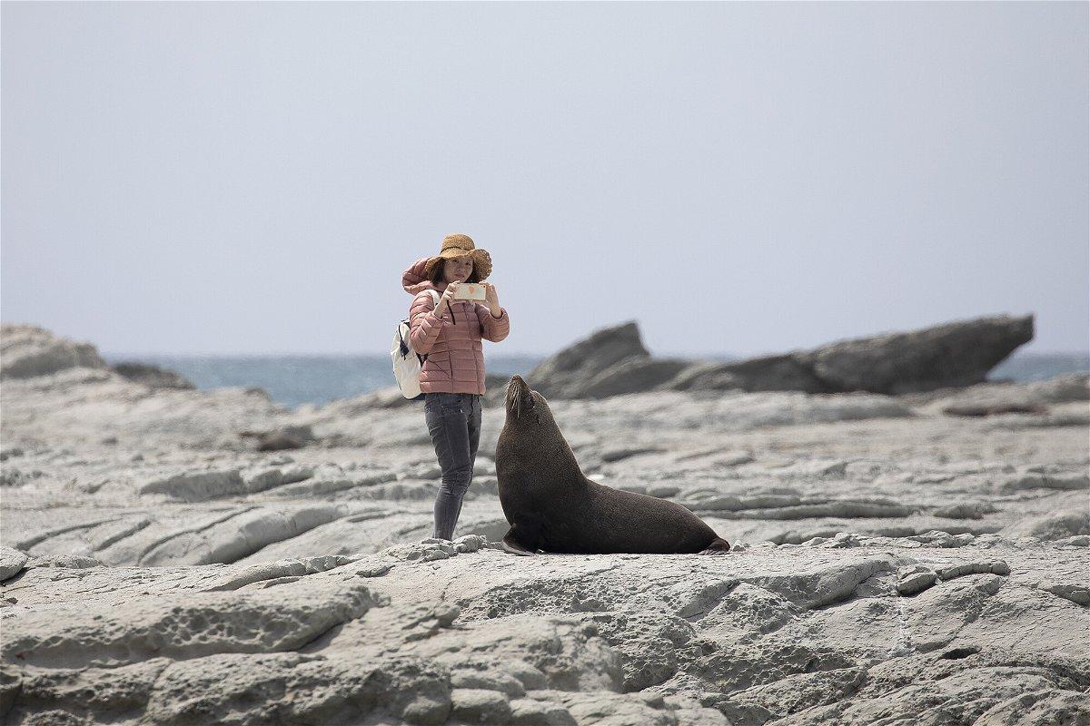 <i>Sanka Vidanagama/NurPhoto/Getty Images</i><br/>A tourist takes pictures of a New Zealand fur sealat the Kaikoura Seal Colony in Kaikoura