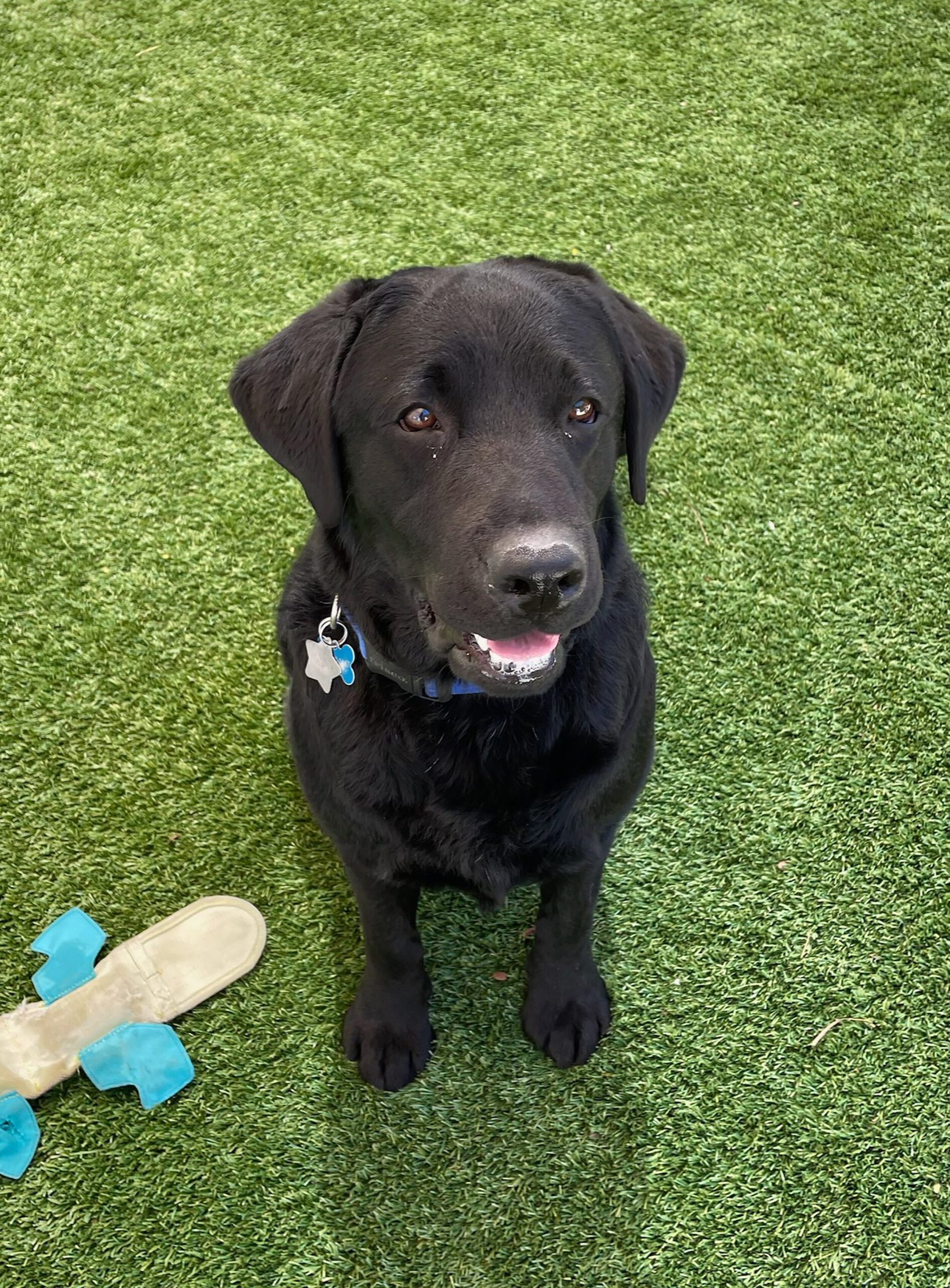 <i>US Capitol Police</i><br/>A three-year old Labrador named Lila is the newest peer support dog for Capitol Hill.